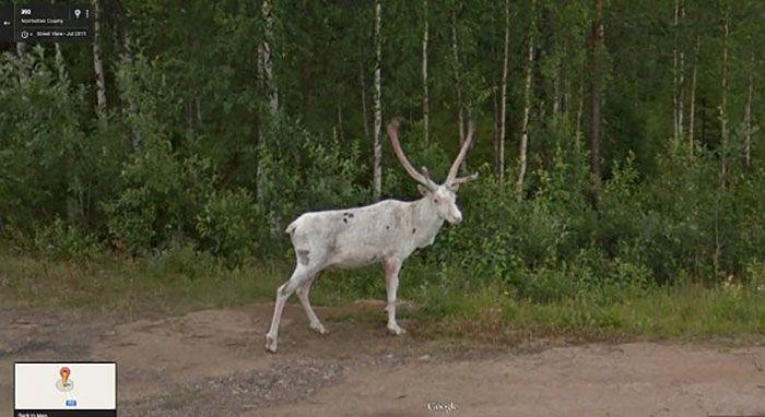 37 melhores fotos de animais tiradas acidentalmente pelo Google Street View 31