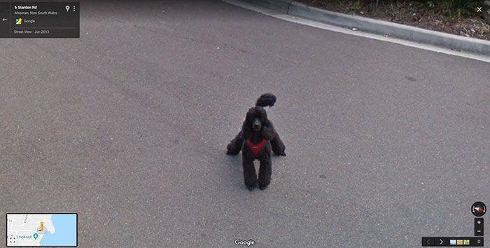 37 melhores fotos de animais tiradas acidentalmente pelo Google Street View 32