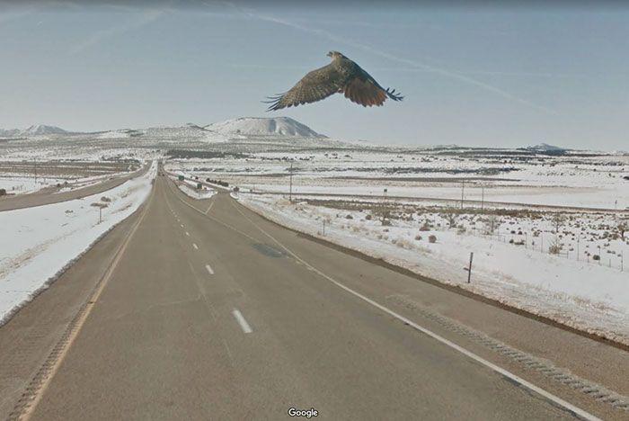 37 melhores fotos de animais tiradas acidentalmente pelo Google Street View 33