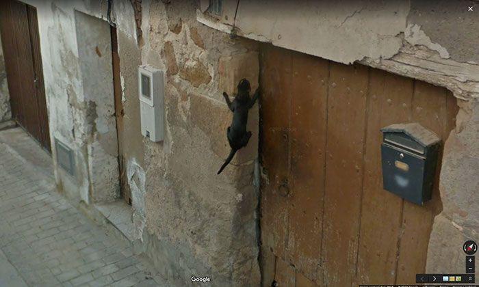 37 melhores fotos de animais tiradas acidentalmente pelo Google Street View 35