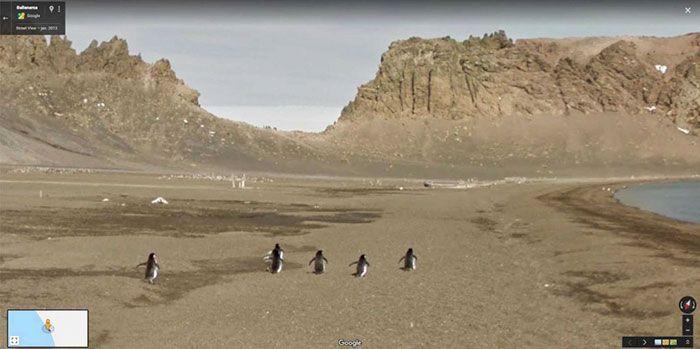 37 melhores fotos de animais tiradas acidentalmente pelo Google Street View 38