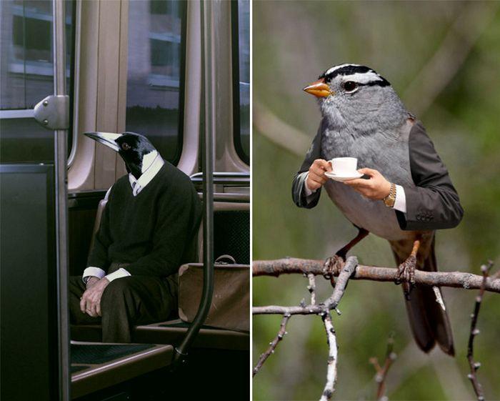 22 pássaros com braços humanos 12