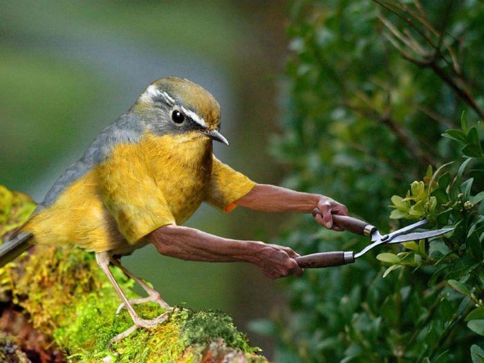22 pássaros com braços humanos 14