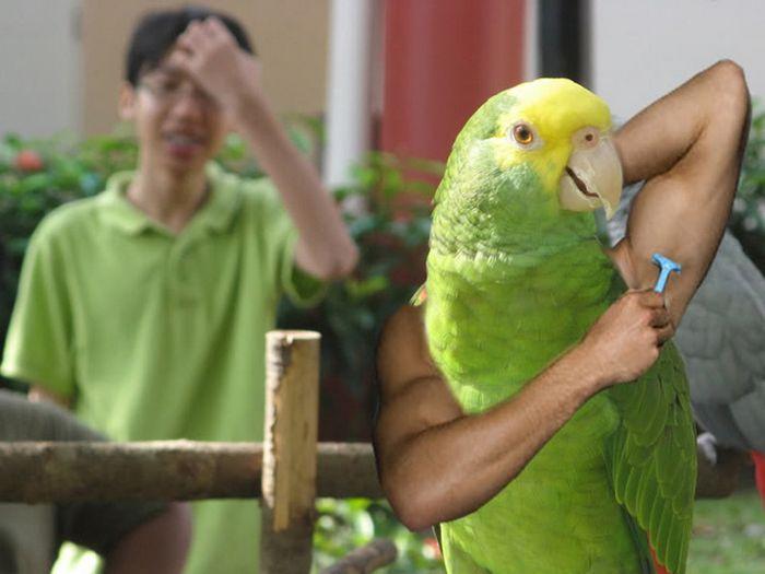 22 pássaros com braços humanos 15