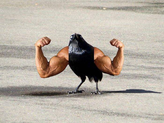 22 pássaros com braços humanos 21