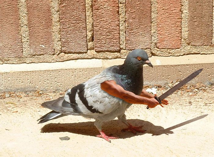 22 pássaros com braços humanos 22