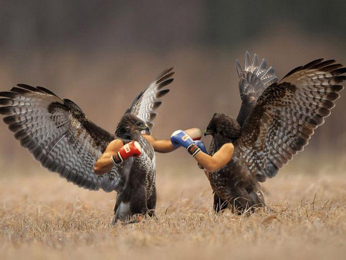 22 pássaros com braços humanos 24