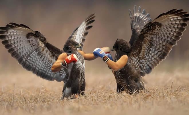 22 pássaros com braços humanos 1