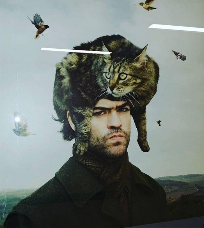 Tendência de moda mais recente: Gatos como chapéus (21 fotos) 3
