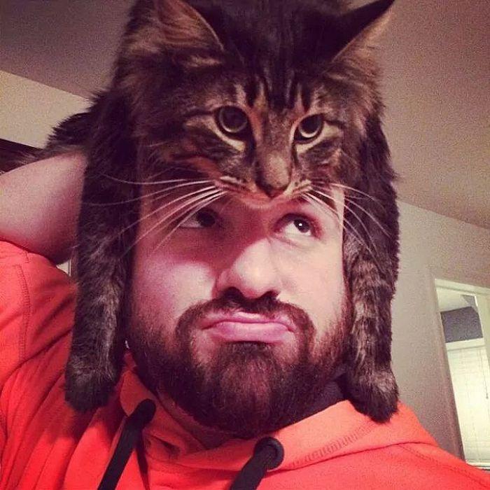 Tendência de moda mais recente: Gatos como chapéus (21 fotos) 4
