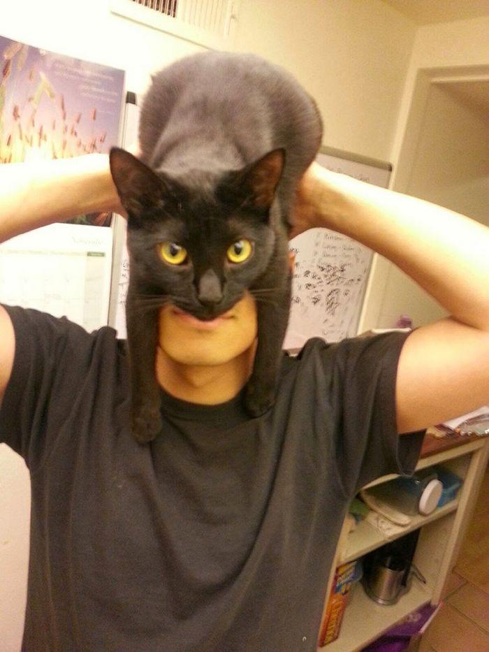 Tendência de moda mais recente: Gatos como chapéus (21 fotos) 5