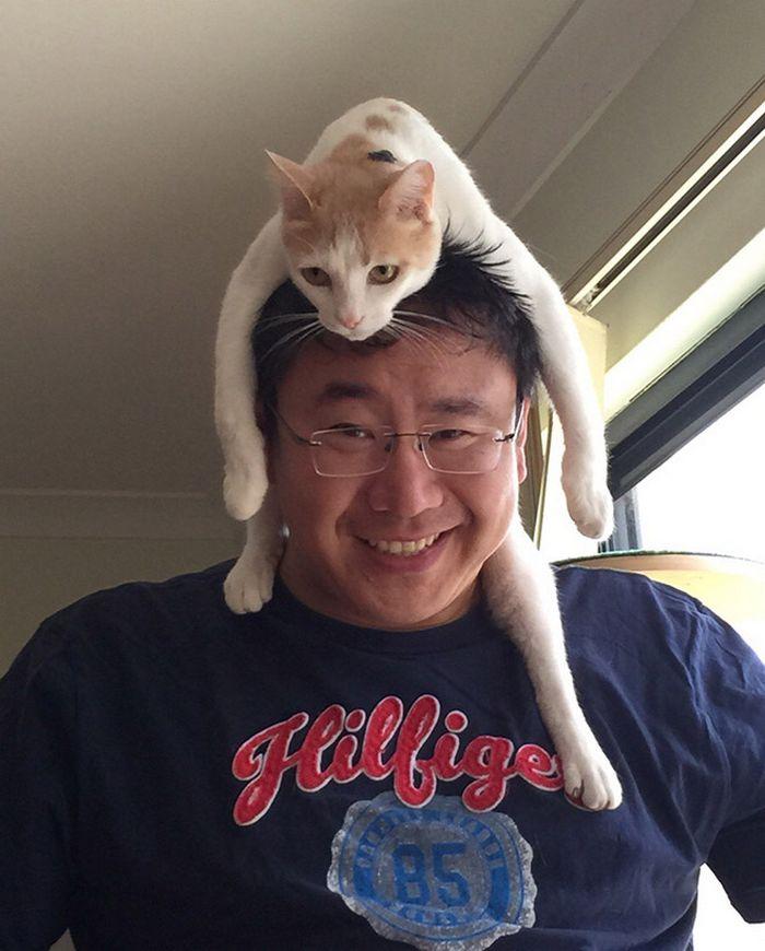 Tendência de moda mais recente: Gatos como chapéus (21 fotos) 6