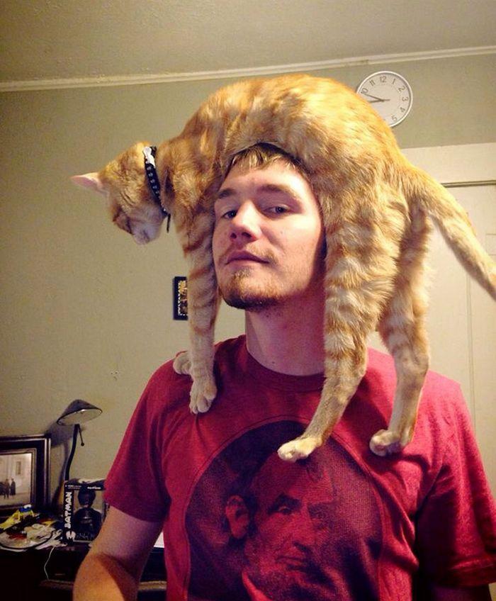Tendência de moda mais recente: Gatos como chapéus (21 fotos) 7