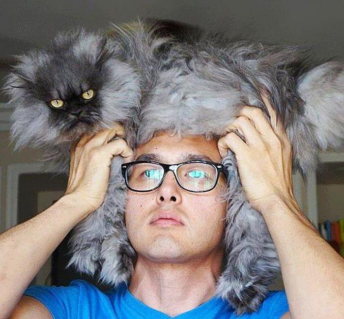 Tendência de moda mais recente: Gatos como chapéus (21 fotos) 8