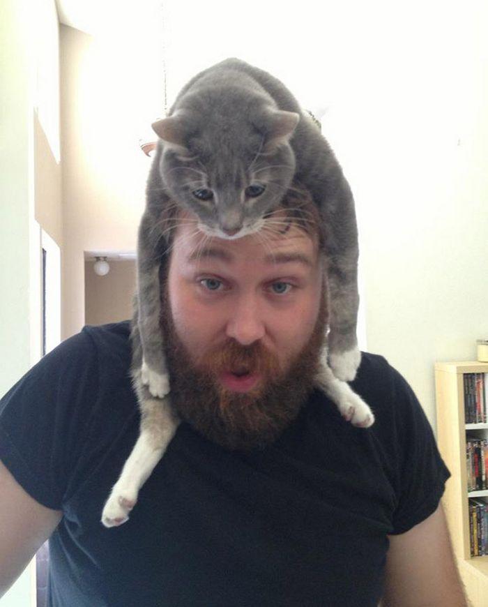 Tendência de moda mais recente: Gatos como chapéus (21 fotos) 9