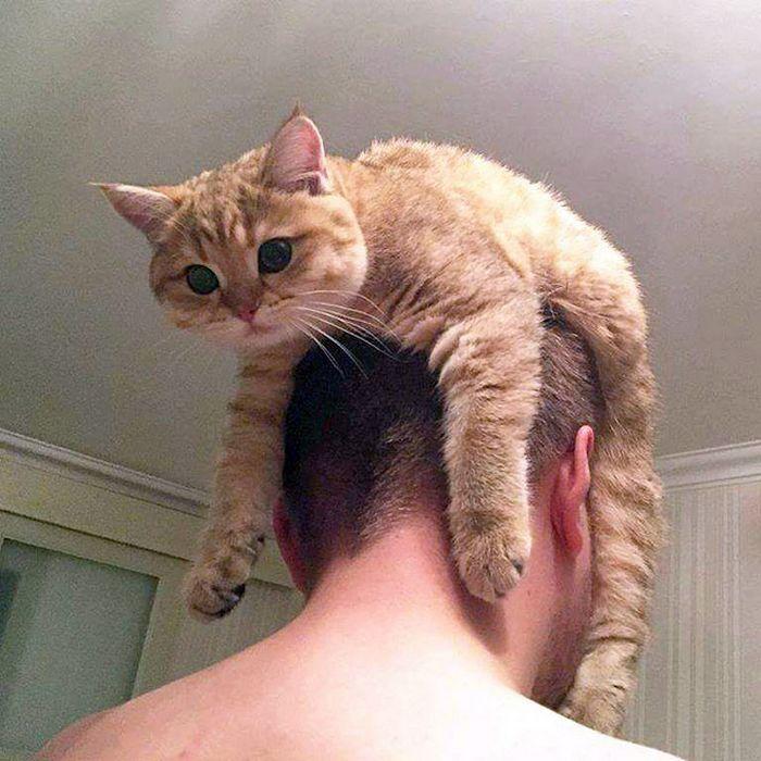 Tendência de moda mais recente: Gatos como chapéus (21 fotos) 10