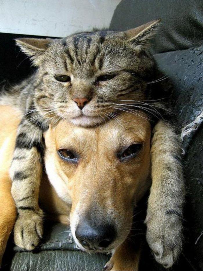 Tendência de moda mais recente: Gatos como chapéus (21 fotos) 11