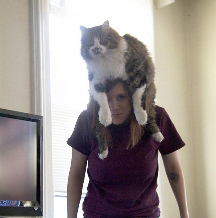Tendência de moda mais recente: Gatos como chapéus (21 fotos) 12