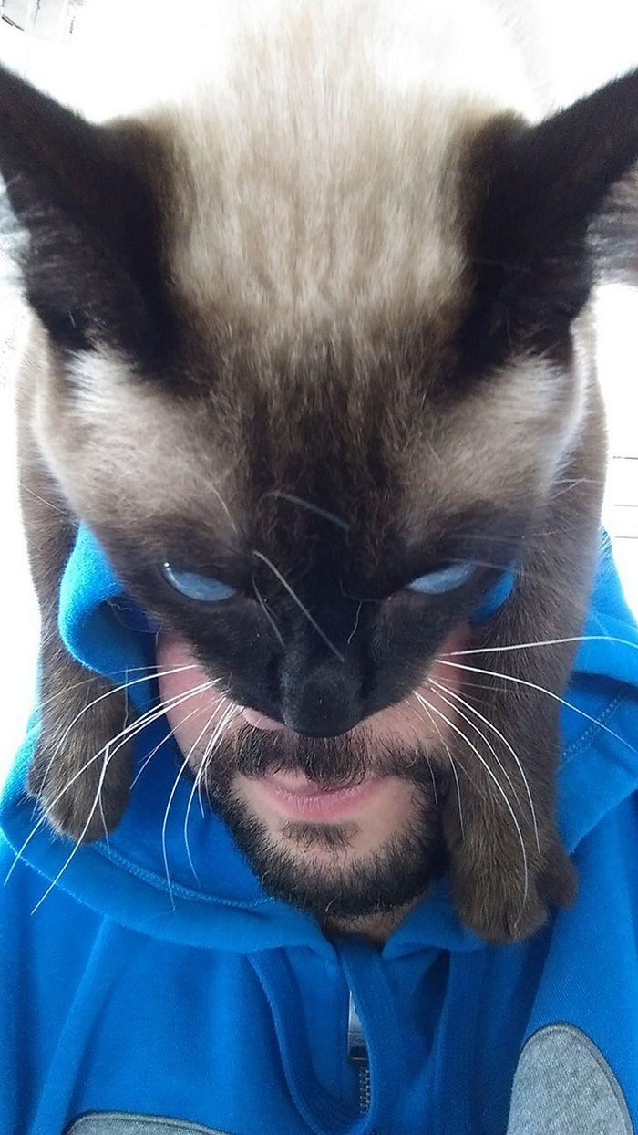 Tendência de moda mais recente: Gatos como chapéus (21 fotos) 14