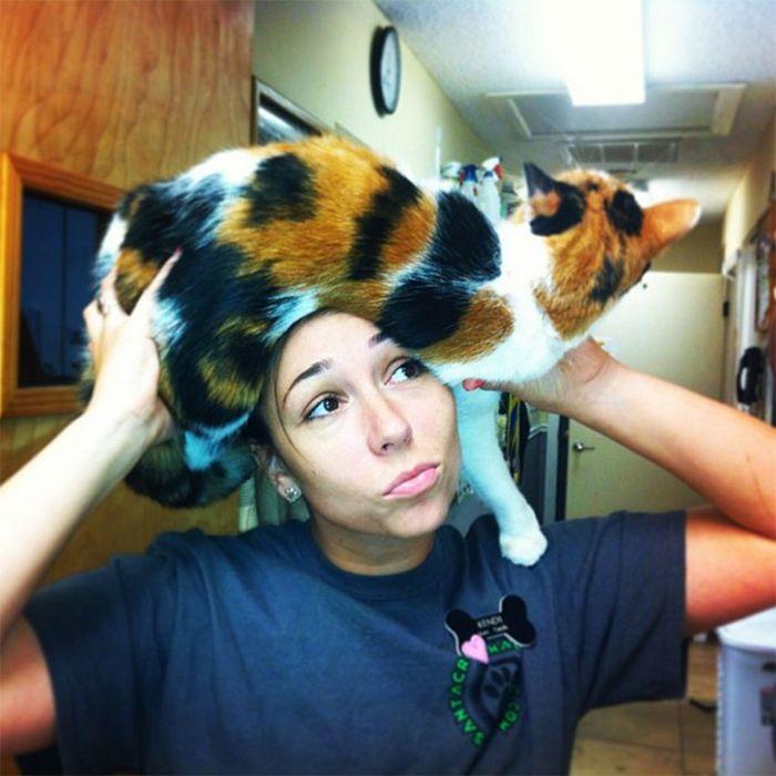 Tendência de moda mais recente: Gatos como chapéus (21 fotos) 16