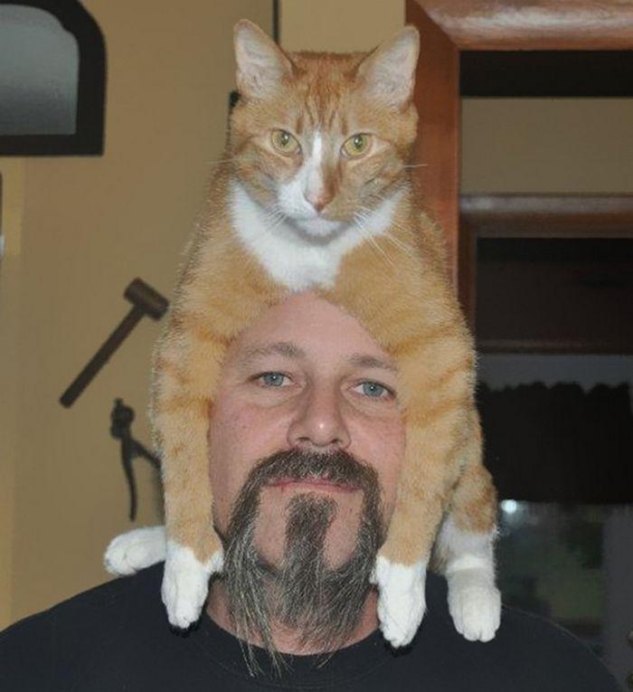Tendência de moda mais recente: Gatos como chapéus (21 fotos) 19