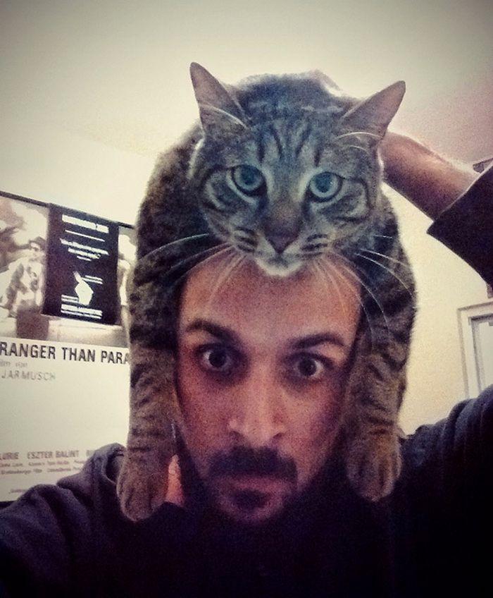 Tendência de moda mais recente: Gatos como chapéus (21 fotos) 21