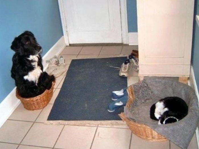 22 gatos folgados que roubaram a cama de cachorros 9