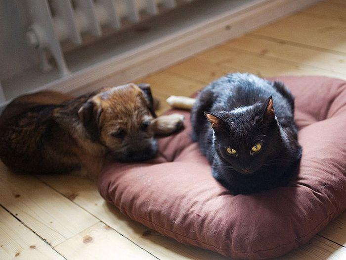 22 gatos folgados que roubaram a cama de cachorros 11