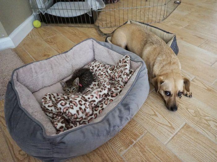 22 gatos folgados que roubaram a cama de cachorros 12