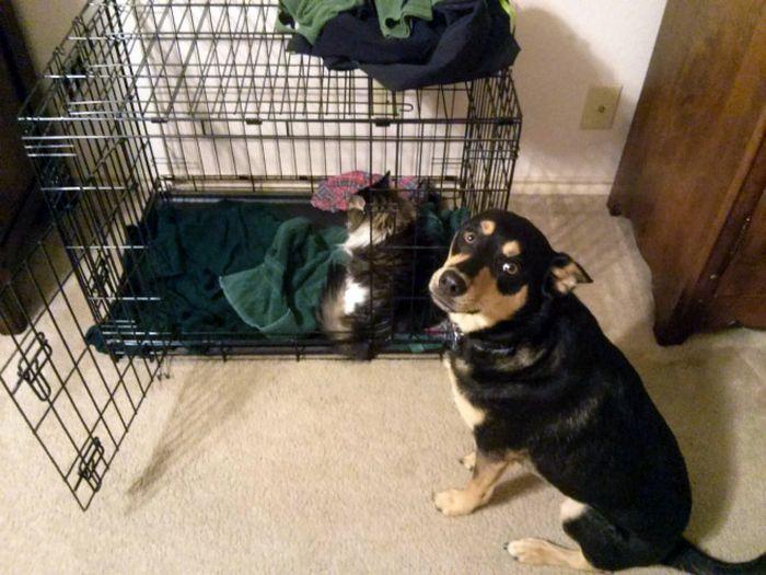 22 gatos folgados que roubaram a cama de cachorros 17