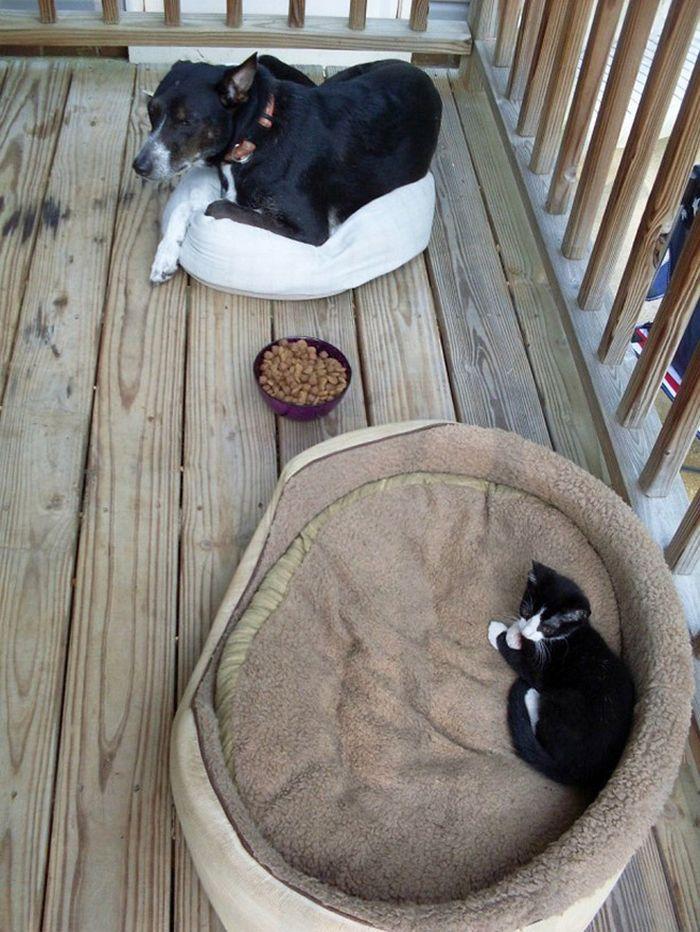 22 gatos folgados que roubaram a cama de cachorros 20
