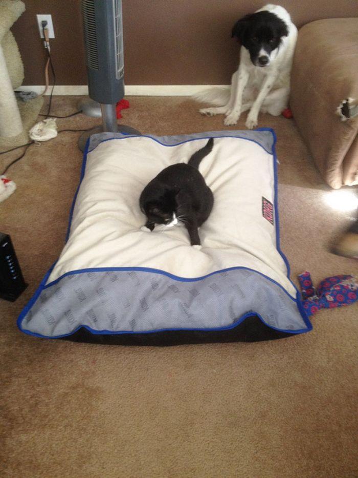 22 gatos folgados que roubaram a cama de cachorros 22