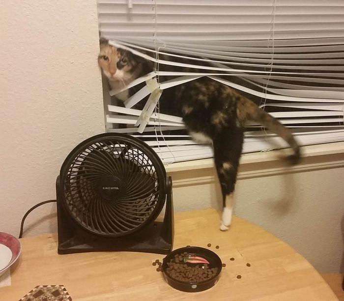 20 gatos que não se incomodam em pedir permissão 4