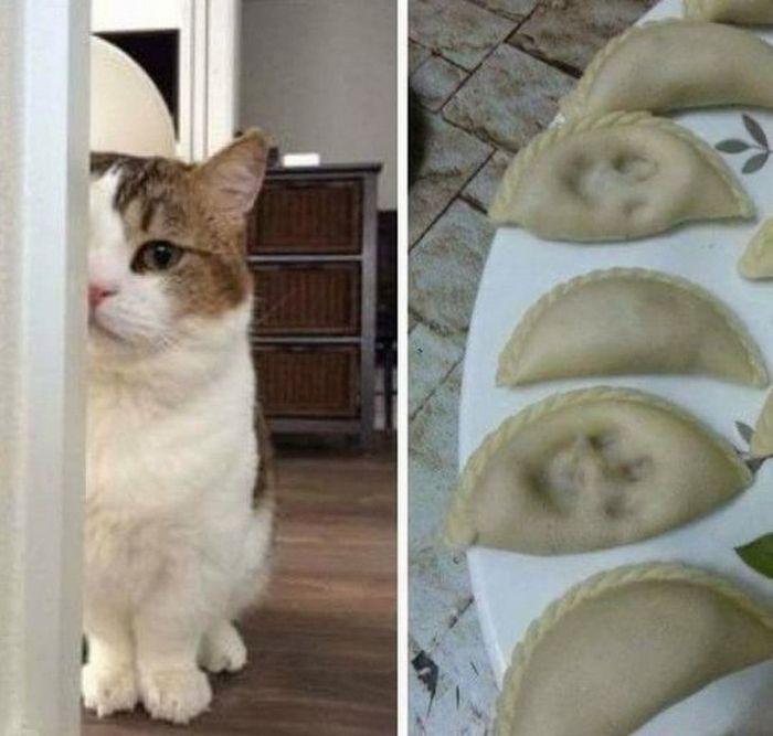 20 gatos que não se incomodam em pedir permissão 19