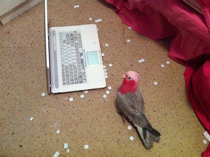 20 pássaros que pode ser doidos 13