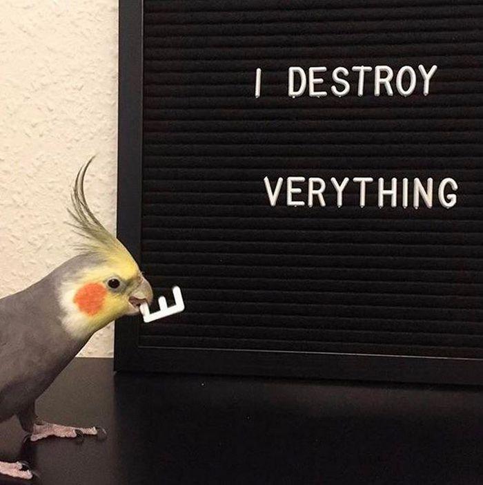 20 pássaros que pode ser doidos 16