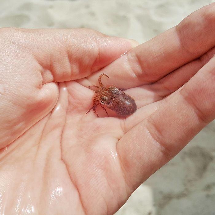 25 pessoas mostram as coisas esquisitas entre os mais raros que já tiveram nas mãos 7