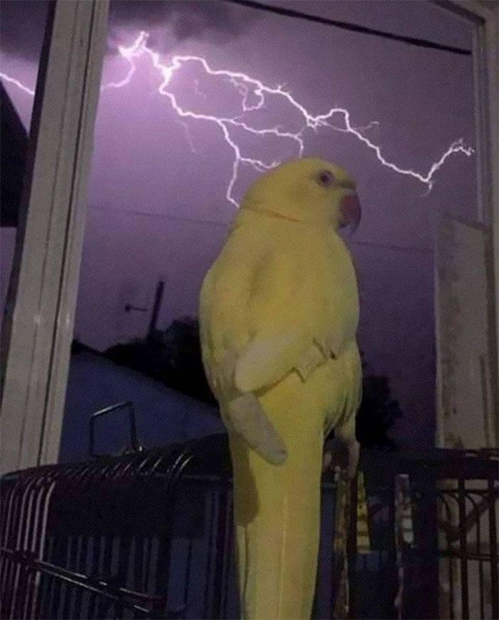 45 animais com auras ameaçadoras 29