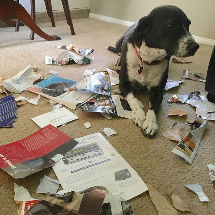 22 cachorros culpados que sentem muito pelo que fizeram 15