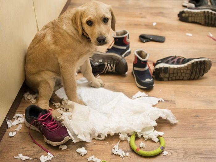 22 cachorros culpados que sentem muito pelo que fizeram 20