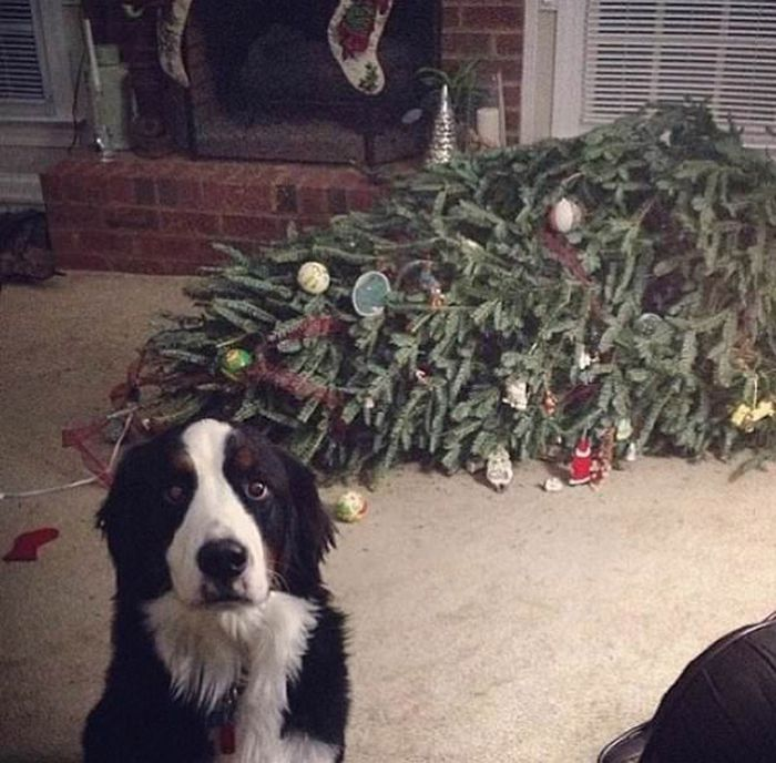 22 cachorros culpados que sentem muito pelo que fizeram 22