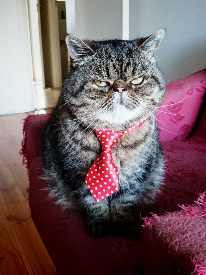 21 gatos com gravatas 2