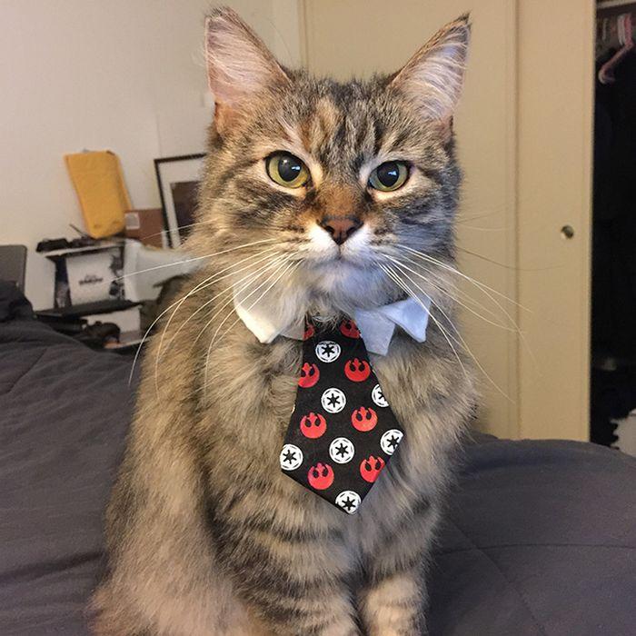 21 gatos com gravatas 3