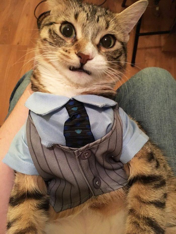 21 gatos com gravatas 4
