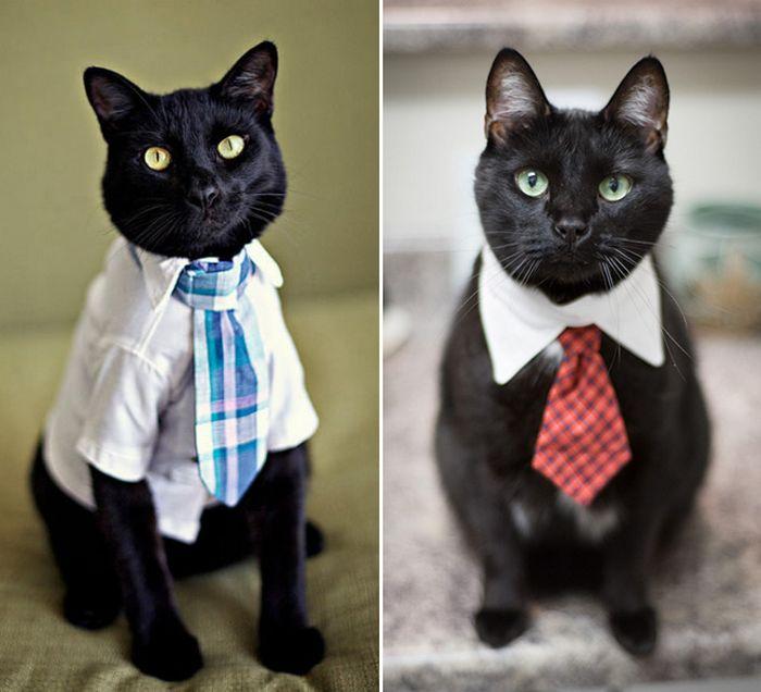 21 gatos com gravatas 5