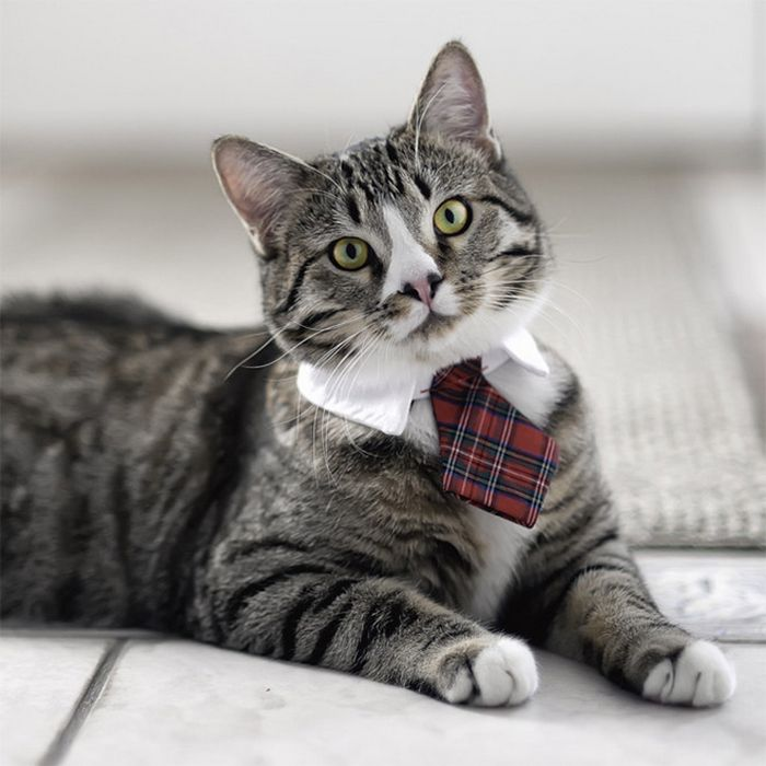 21 gatos com gravatas 6