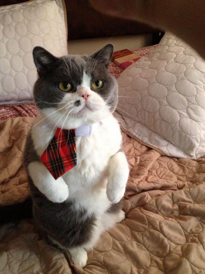 21 gatos com gravatas 7