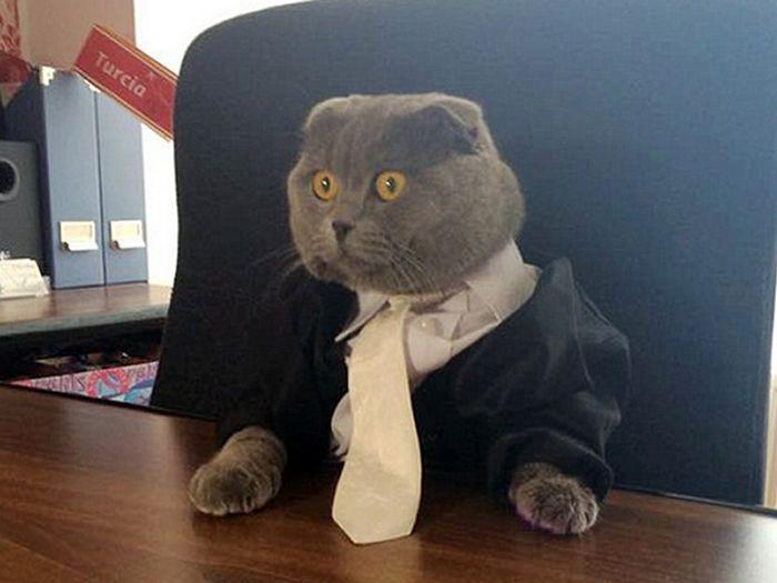 21 gatos com gravatas 9