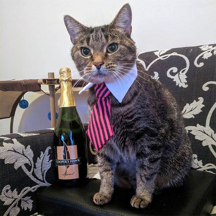 21 gatos com gravatas 10