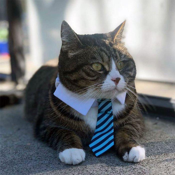 21 gatos com gravatas 11